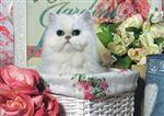 Puzzle Jumbo - Kočka v koši 1000 dílků